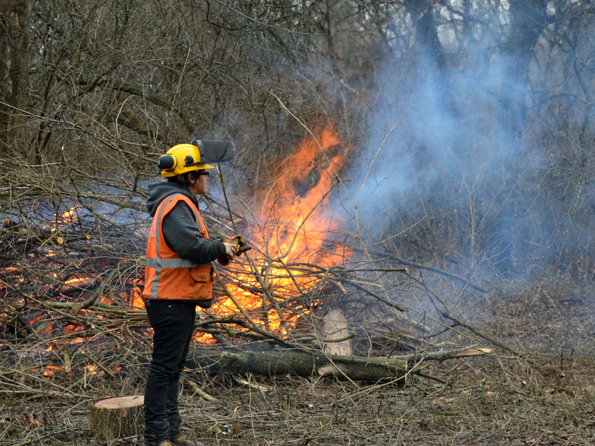 Conservation Corps crew burns brush during the winter in Speers Woods.