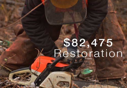Restoration is a key program of the Forest Preserve Foundation.