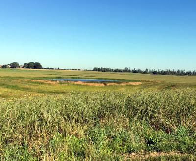 Orland Grassland