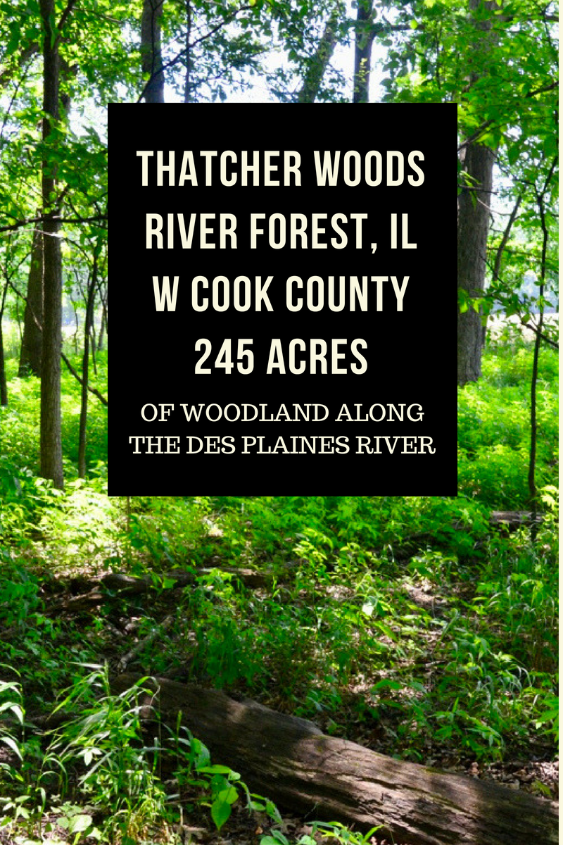 About Thatcher Woods