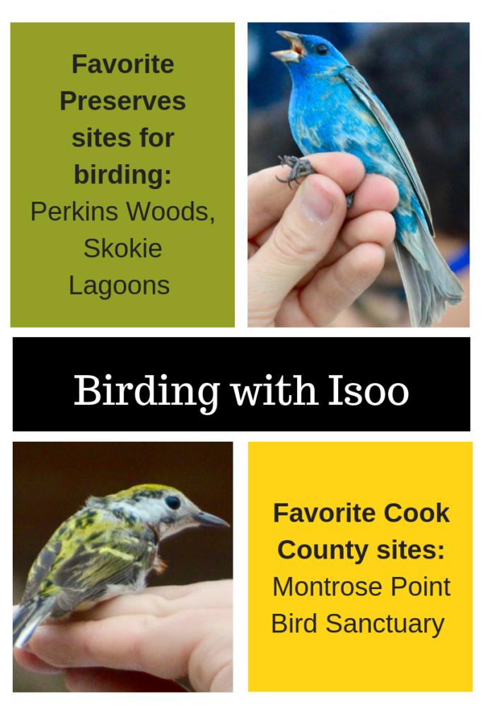 birding with Isoo