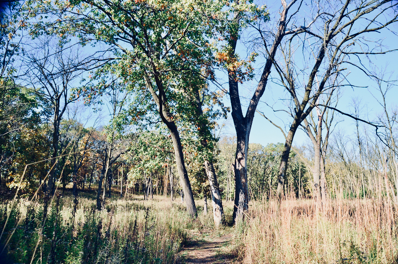 Volunteer stewards are essential to maintaining the beauty of Ted Stone Preserve
